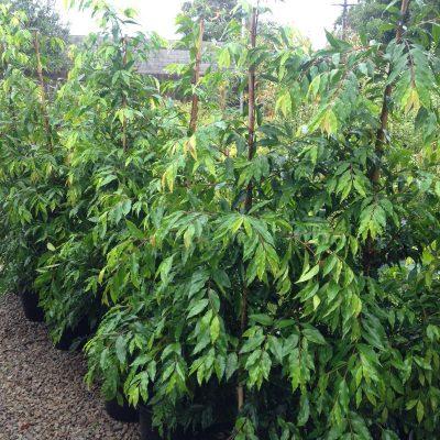 Plants TJs Wholesale Plants